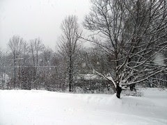 Snow 11809