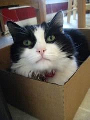 Josie claimed the box first
