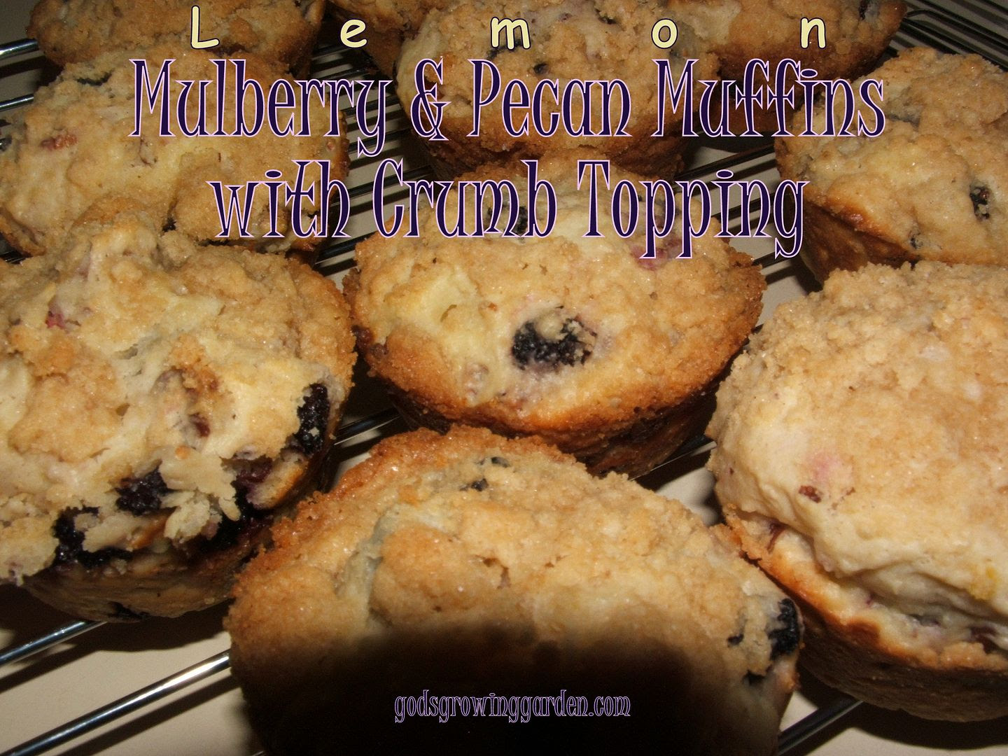 Mulberry Muffins by Angie Ouellette-Tower for godsgrowinggarden.com photo 010_zpsdc35c606.jpg