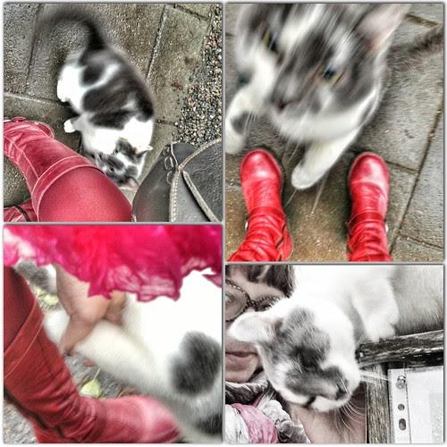 caturday meet cute