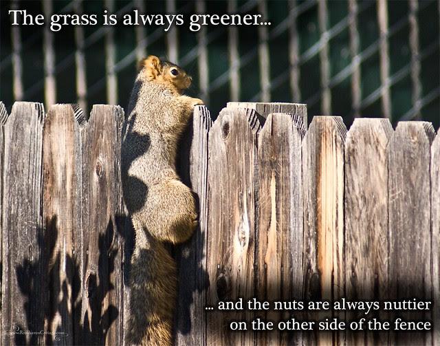 Wildlife wisdom...