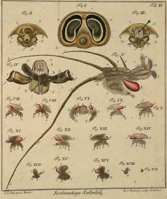 engraving of insects