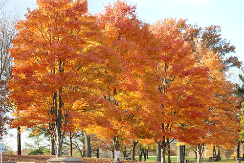 IMG_2941_Trees_at_Rest_Area_South_of_Cincinnati