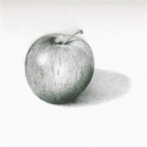 pencil drawing   apple shows form  shows form