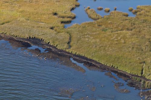 oiled marsh - burnt marsh
