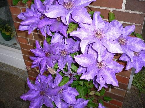 blomsterflor 2