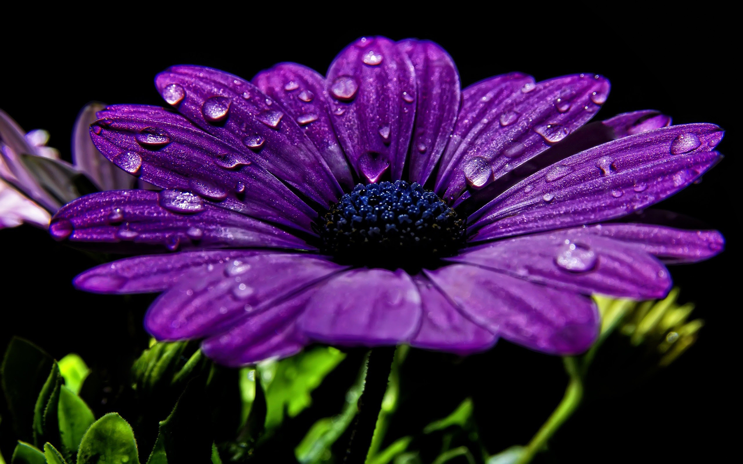39 High Definition Purple Wallpaper Images for Free Download
