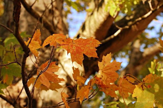 Shades of Autumn - Orange
