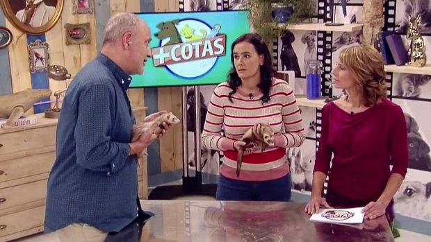 El veterinario Carlos Rodríguez nos enseña a cuidar a nuestros animales de compañía en TVE en '+cotas'