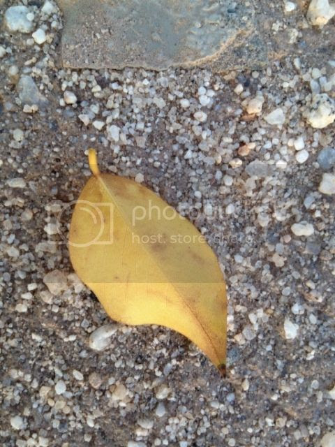 Stray leaf photo IMG_0812_zpsvuhslmwz.jpg
