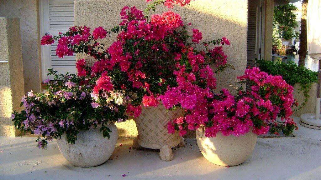 Gambar Pot Bunga Unik Minimalis