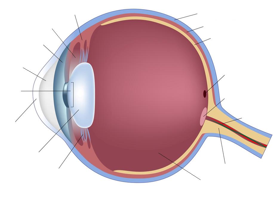 Human Eye Anatomy Quiz - By smac17
