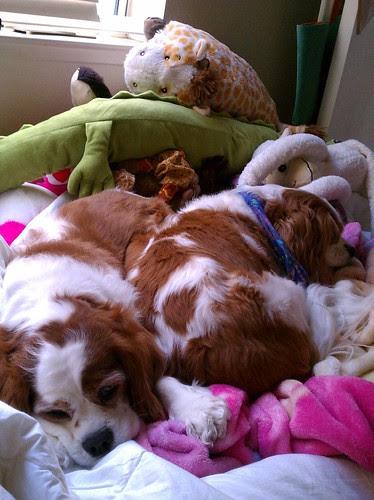Doggie Invasion
