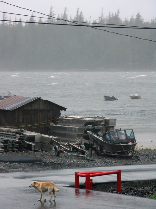 a wet and windy scene with a dog on the street and a boat in the water from Hydaburg, Alaska