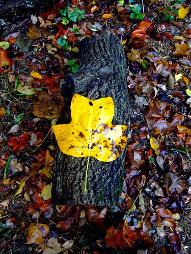 Stump and a leaf by Stephen Bess