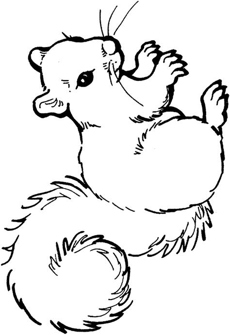 squirrel coloring pages coloringpagescom