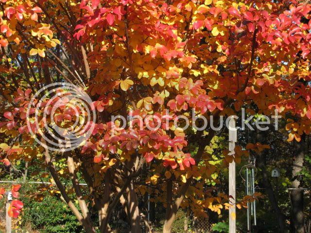 photo autumnevening002.jpg