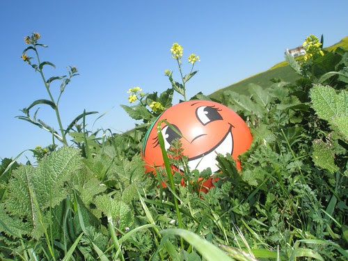 miss orange in the grass