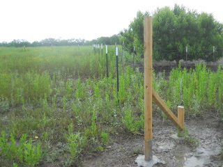 Still More Fence T-posts in Place