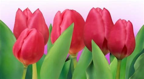 Bunga tulip free vector download (168 Free vector) for