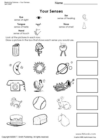five sense worksheet new 656 five senses worksheets third grade. Black Bedroom Furniture Sets. Home Design Ideas