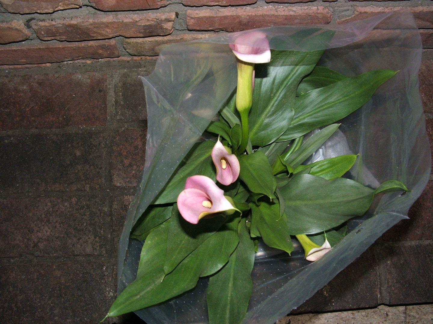 Calla Lily Birthday by Angie Ouellette-Tower for godsgrowinggarden.com photo 001_zpsecc8628f.jpg