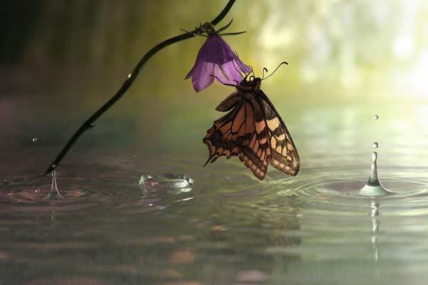perierga.gr - Ένας μαγευτικός μικρόκοσμος... στη βροχή!