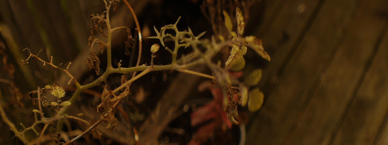 plant CU