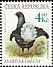 Black Grouse Lyrurus tetrix