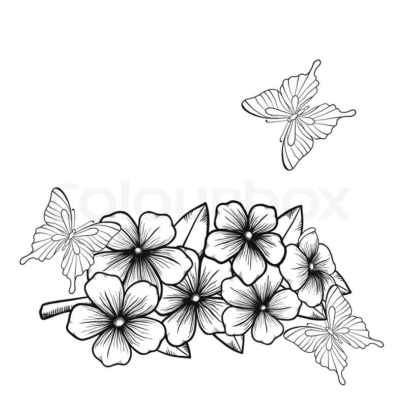 White Butterfly Drawing At Getdrawingscom Free For Personal Use