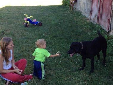 Labrador έσωσε μωράκι απο πνιγμό