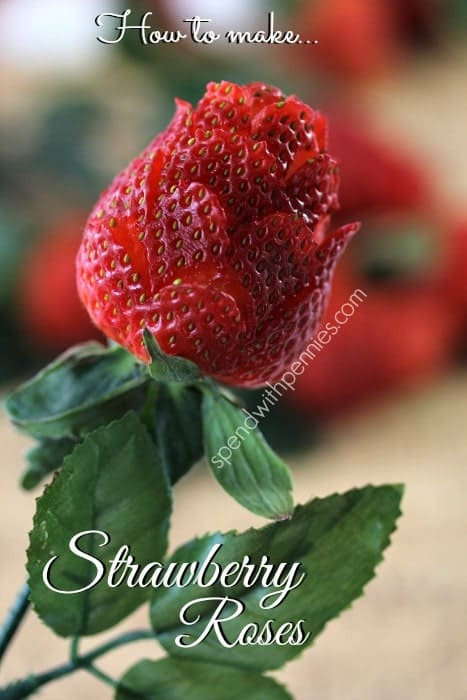 strawberry roses single