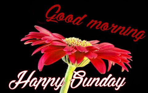 Sunday Good Morning Wishes Pics Photo