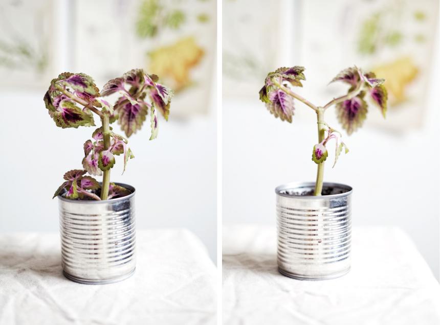 Plantbyrån, träd i miniformat eller att stamma upp en växt