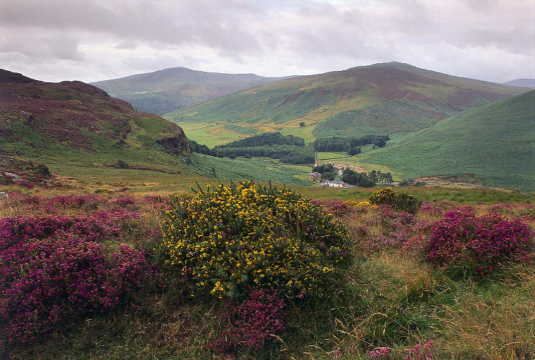 wicklow-mountains.jpg