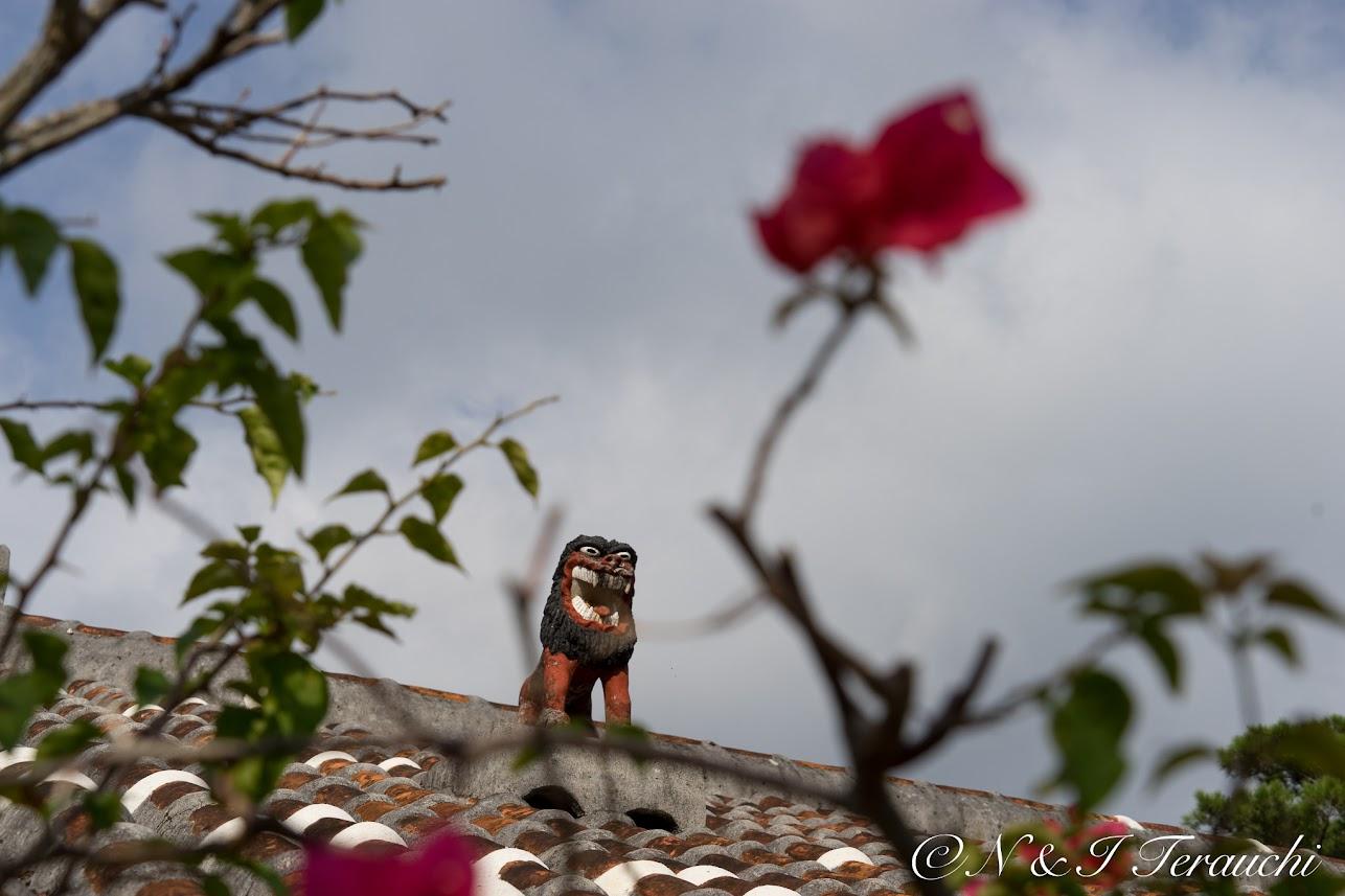 屋根の上で見守るシーサー