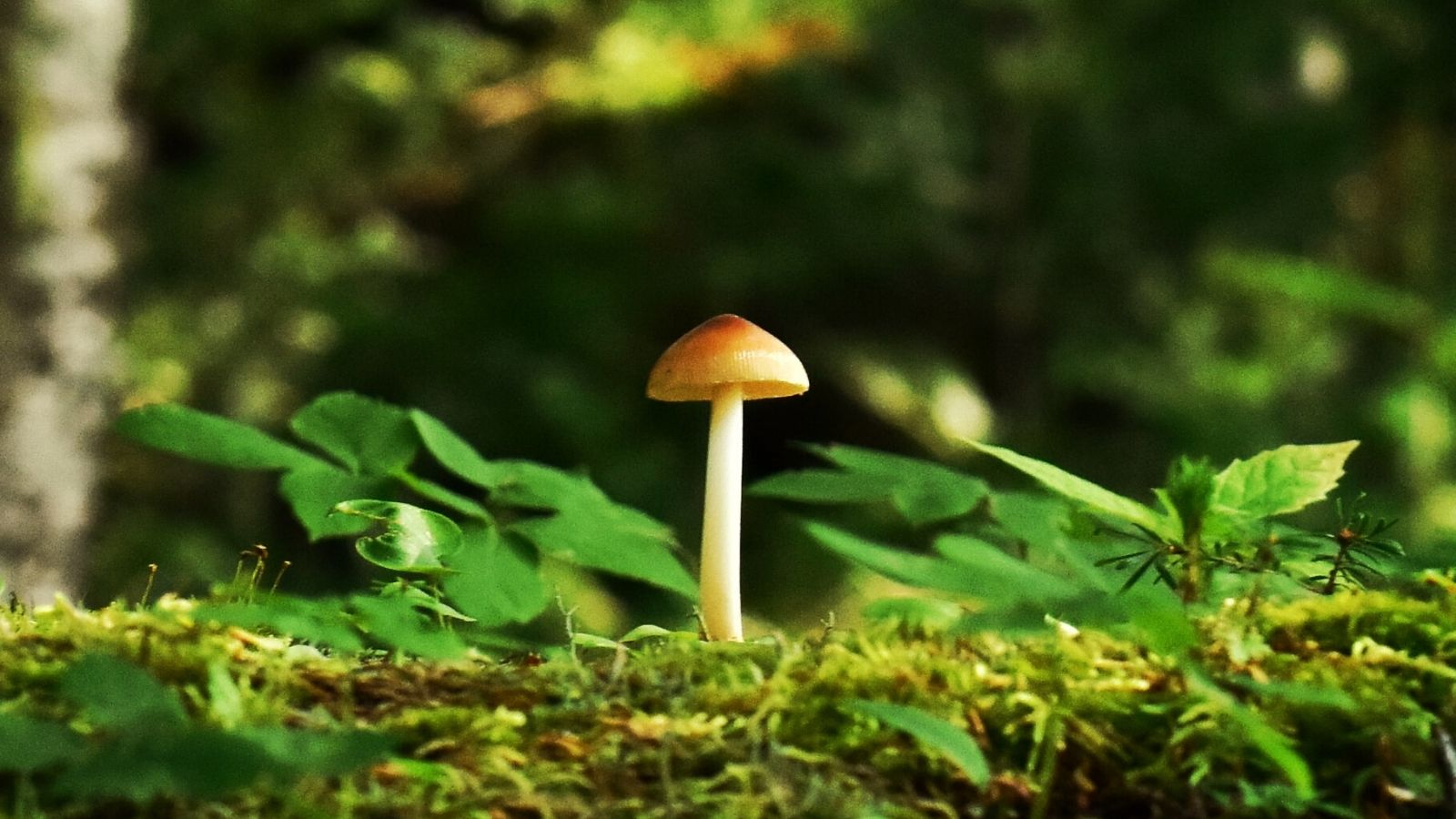 A magic mushroom growing in the forest.