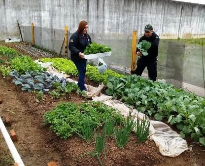 A horta sustentável concede aos presos outros benefícios como a aprendizagem de um ofício que os recoloque ao mercado de trabalho. (Divulgação/Susepe)