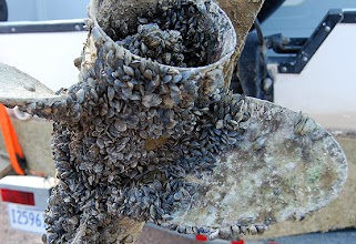 Propeller contaminated with invasive mussels