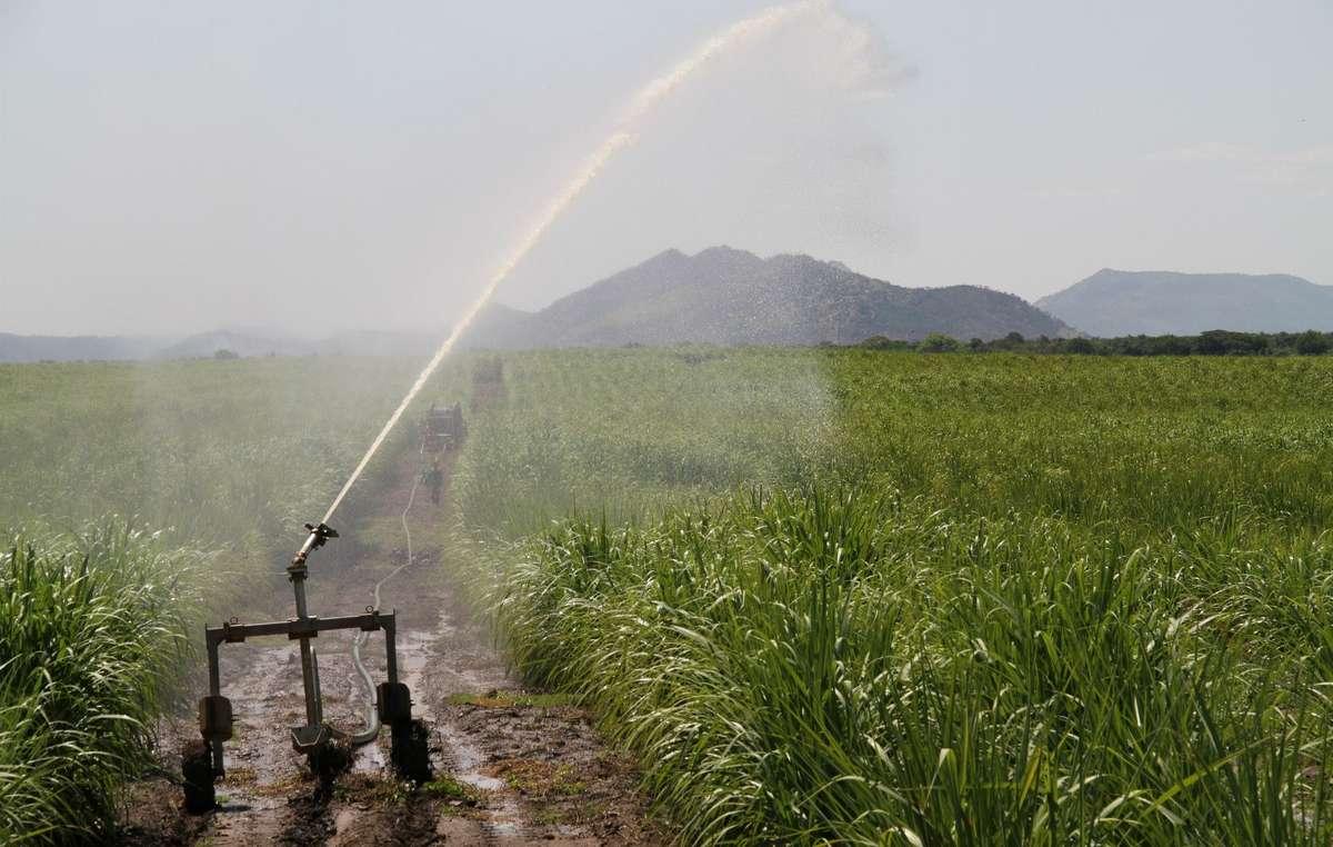 Image result for ethiopia  omo Sugarcane plantation image