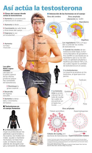 testosterona ayuda a bajar de peso