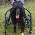 C:UsersuserDesktopTomomi2カット済み超大型犬XL4輪481.jpg