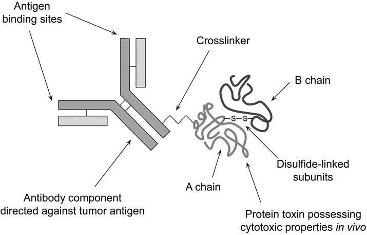 Toxin antibody conjugate