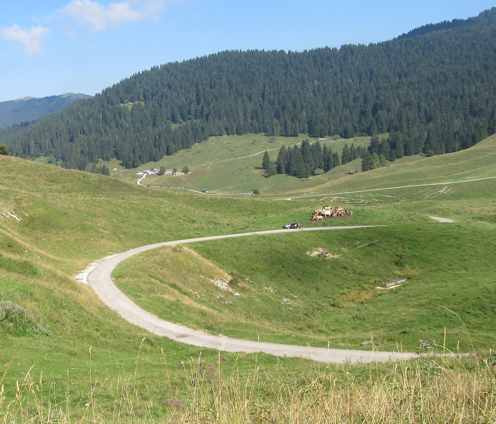 Cycling Monte Grappa from Seren - field, cows,