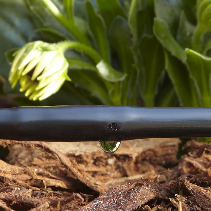 close-up of a drip irrigation system