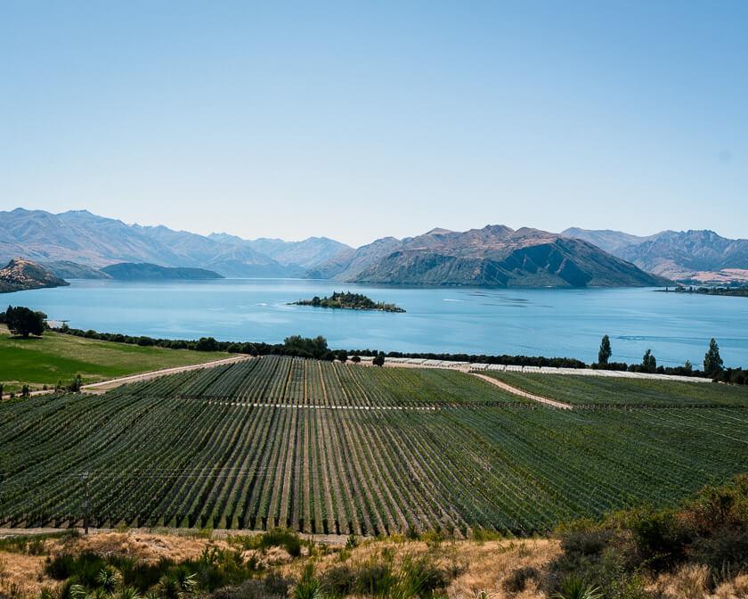 Wanaka winery.
