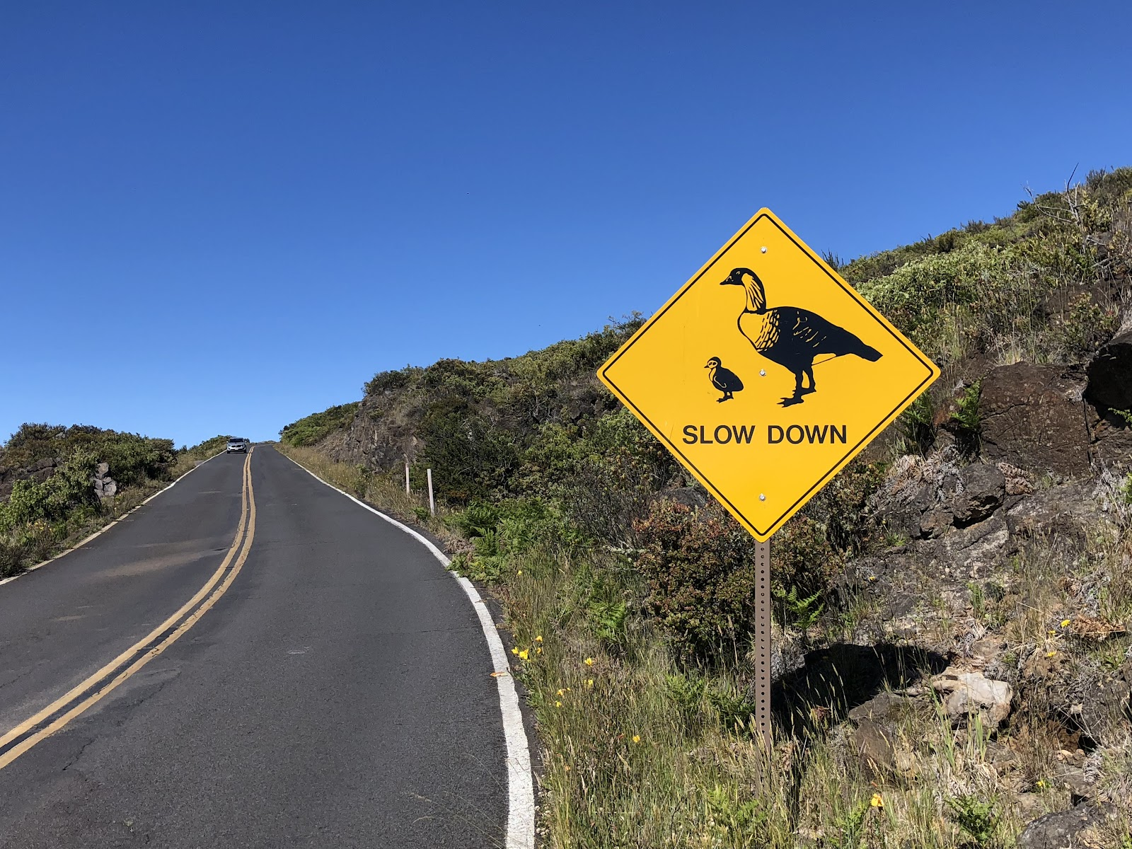 One of the Hardest bike climbs in the US and world - Haleakala Volcano - nene crossing sign and roadway