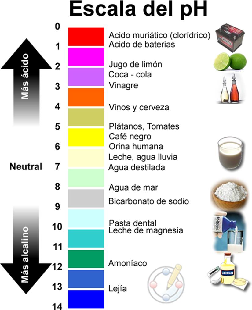 Resultado de imagen para sabor acido y base