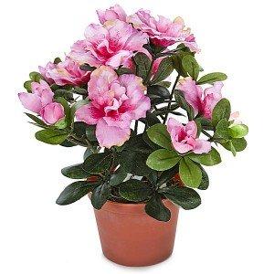 las plantas sin flores: