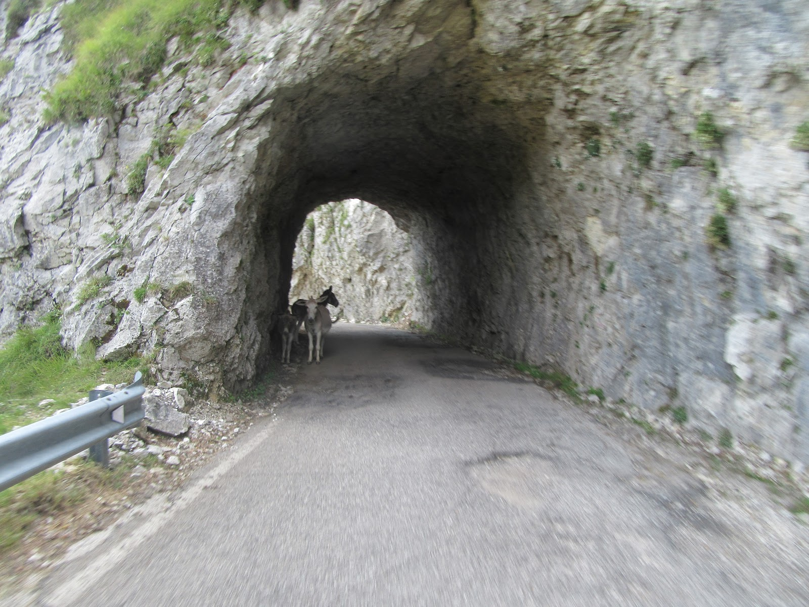 Bicycle climb Monte Grappa from Possagno - tunnel with mules